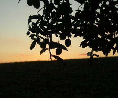 aurora con olive