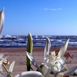 Le dune e la flora retrodunale